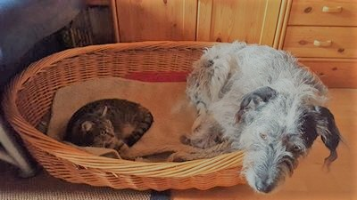 Mediation ist Konfliktlösung, Gesprächsfindung und -führung auch zwischen sehr unterschiedlichen Teilnehmern. Ein Hund und eine Katze liegen in einem Korb. Sie haben gelernt miteinander zu leben.