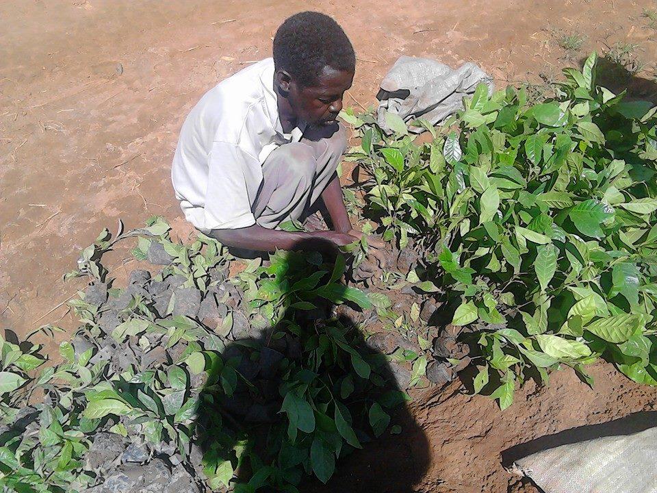 die Kaffeeplantage der Zukunft